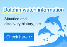 Dolphin watch information